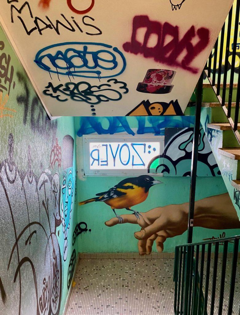 Transition-Abbeville-art-urbain-cage-escalier-oiseau