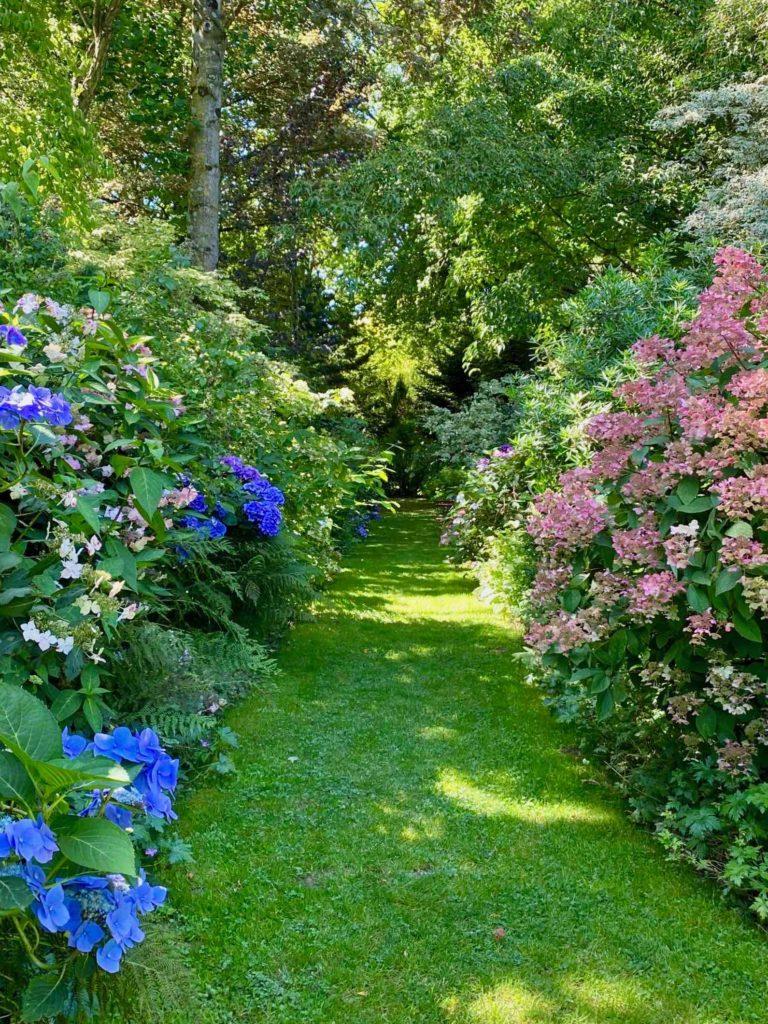 Le-Jardin-des-Lianes-Cheriennes-allee