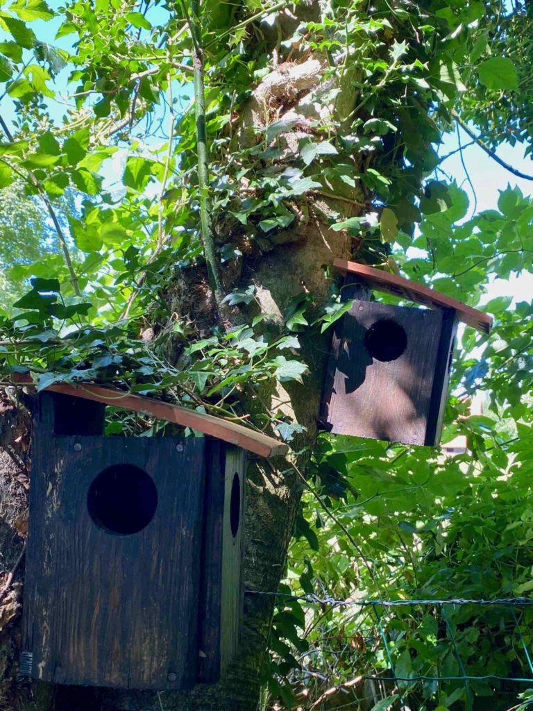 Le-Jardin-des-Lianes-Cheriennes-maison-a-oiseaux-huit