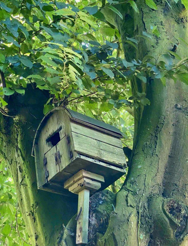Le-Jardin-des-Lianes-Cheriennes-maison-a-oiseaux-six